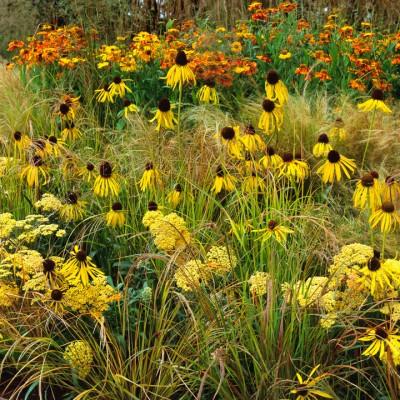 wpid8908-Colour-in-the-Garden-DHEB295-nicola-stocken.jpg