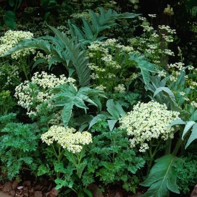 wpid8910-Colour-in-the-Garden-DHEB307-nicola-stocken.jpg