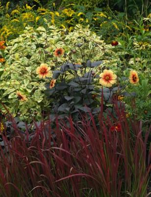 wpid8917-Colour-in-the-Garden-DWOO095-nicola-stocken.jpg