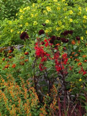 wpid8919-Colour-in-the-Garden-DWOO099-nicola-stocken.jpg