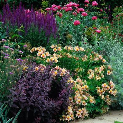 wpid8921-Colour-in-the-Garden-FBED019-nicola-stocken.jpg