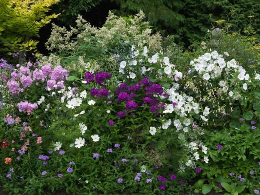 wpid8931-Colour-in-the-Garden-GBOX119-nicola-stocken.jpg