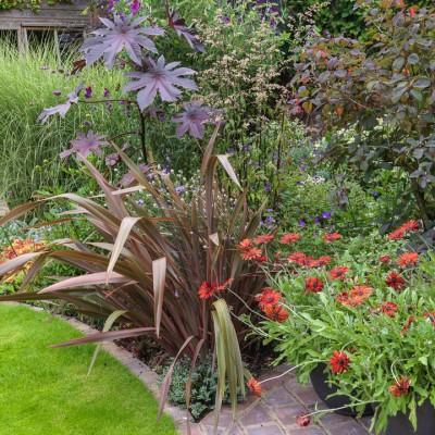 wpid8935-Colour-in-the-Garden-GCOM011-nicola-stocken.jpg