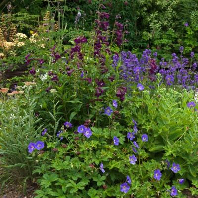 wpid8937-Colour-in-the-Garden-GCRE026-nicola-stocken.jpg