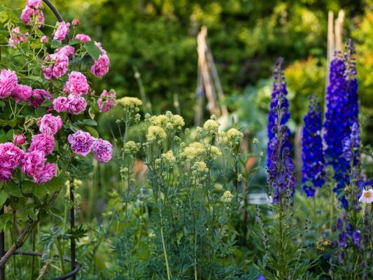 wpid8943-Colour-in-the-Garden-GDIA091-nicola-stocken.jpg