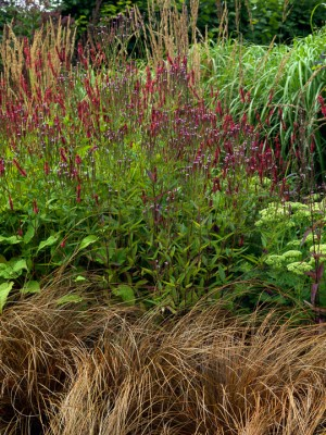 wpid8945-Colour-in-the-Garden-GGPE035-nicola-stocken.jpg