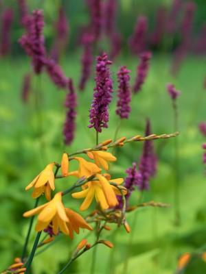 wpid8951-Colour-in-the-Garden-GMOL038-nicola-stocken.jpg