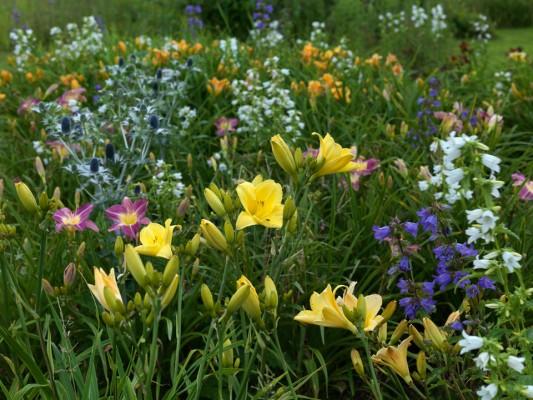 wpid8955-Colour-in-the-Garden-GMYN021-nicola-stocken.jpg
