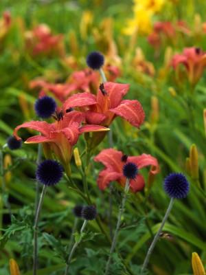 wpid8957-Colour-in-the-Garden-GMYN025-nicola-stocken.jpg
