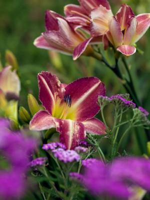 wpid8959-Colour-in-the-Garden-GMYN027-nicola-stocken.jpg