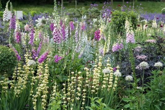 wpid8965-Colour-in-the-Garden-GORD094-nicola-stocken.jpg