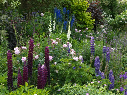 wpid8971-Colour-in-the-Garden-GSTK016-nicola-stocken.jpg