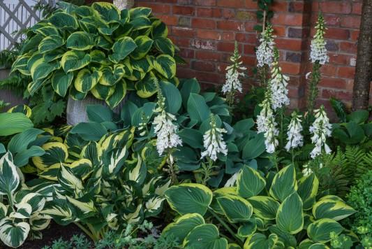 wpid8973-Colour-in-the-Garden-GTHO051-nicola-stocken.jpg