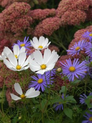 wpid8979-Colour-in-the-Garden-GWLO036-nicola-stocken.jpg