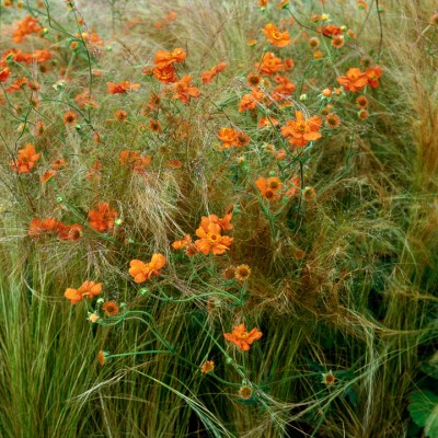 wpid8981-Colour-in-the-Garden-OSTI027-nicola-stocken.jpg