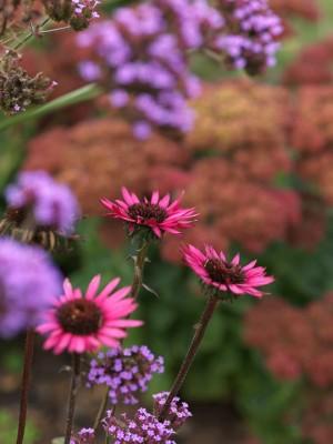 wpid8985-Colour-in-the-Garden-PECH053-nicola-stocken.jpg