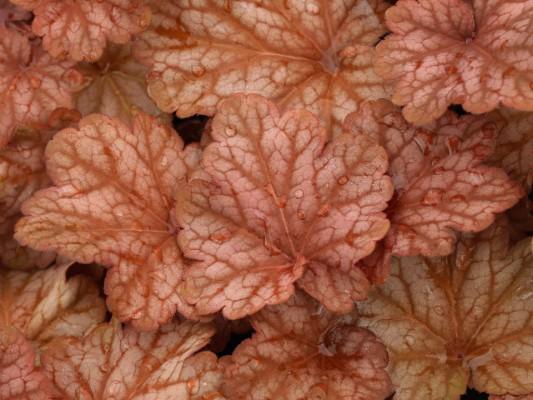 wpid8987-Colour-in-the-Garden-PHEU037-nicola-stocken.jpg