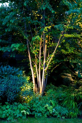 wpid9062-Garden-Lighting-GSMD057-nicola-stocken.jpg