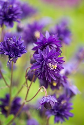 wpid9114-Cottage-Gardens-PAQU057-nicola-stocken.jpg