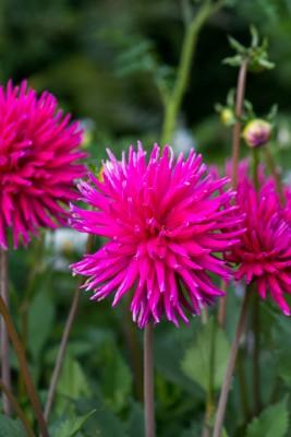 wpid9509-Abbeywood-Gardens-in-August-FDAH199-nicola-stocken.jpg