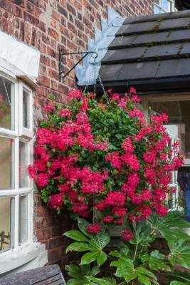 wpid10249-Brooke-Cottage-in-August-GBRK043-nicola-stocken.jpg