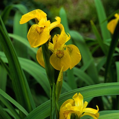 wpid10295-Field-House-Garden-in-May-BIRI165-nicola-stocken.jpg