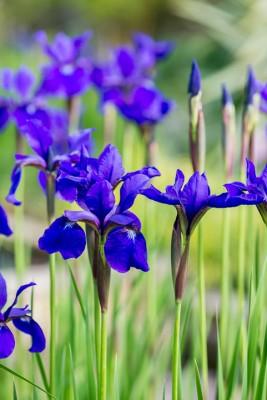 wpid10297-Field-House-Garden-in-May-BIRI234-nicola-stocken.jpg