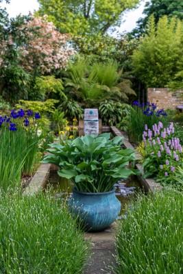wpid10329-Field-House-Garden-in-May-GFIE013-nicola-stocken.jpg