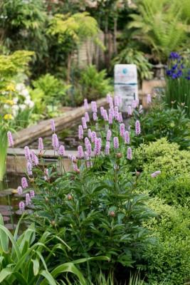 wpid10331-Field-House-Garden-in-May-GFIE014-nicola-stocken.jpg