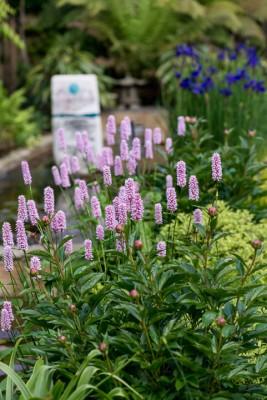 wpid10333-Field-House-Garden-in-May-GFIE015-nicola-stocken.jpg