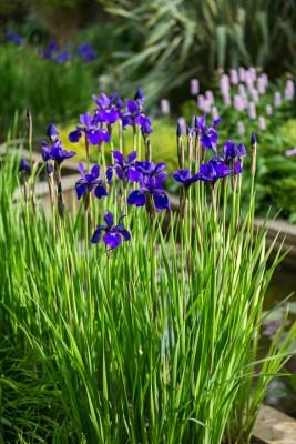 wpid10335-Field-House-Garden-in-May-GFIE016-nicola-stocken.jpg