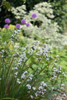 wpid10360-Field-House-Garden-in-May-GFIE028-nicola-stocken.jpg