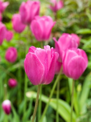 wpid10493-Garden-Lodge-in-Spring-BTUL182-nicola-stocken.jpg