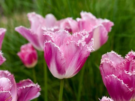 wpid10495-Garden-Lodge-in-Spring-BTUL183-nicola-stocken.jpg