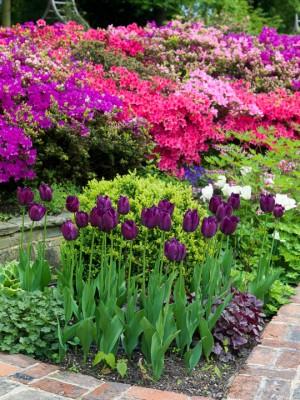 wpid10517-Garden-Lodge-in-Spring-GGLO060-nicola-stocken.jpg