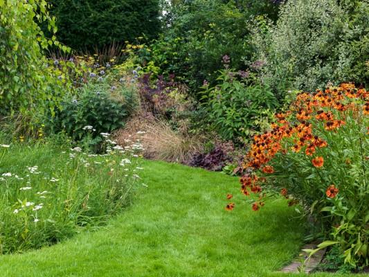wpid10801-Late-Summer-Family-Garden-GLAU019-nicola-stocken.jpg