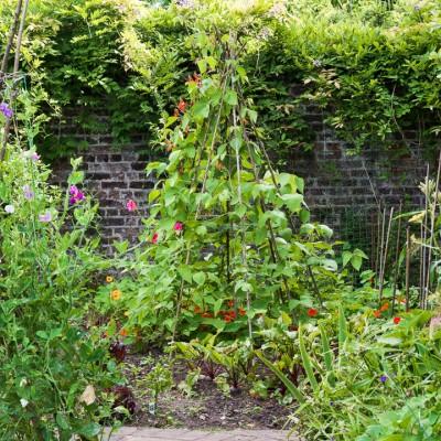 wpid10813-Late-Summer-Family-Garden-GLAU025-nicola-stocken.jpg
