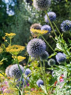 wpid10821-Late-Summer-Family-Garden-GLAU029-nicola-stocken.jpg