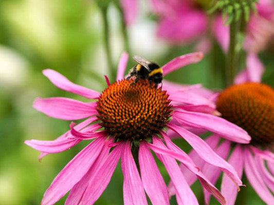 wpid10827-Late-Summer-Family-Garden-PECH072-nicola-stocken.jpg