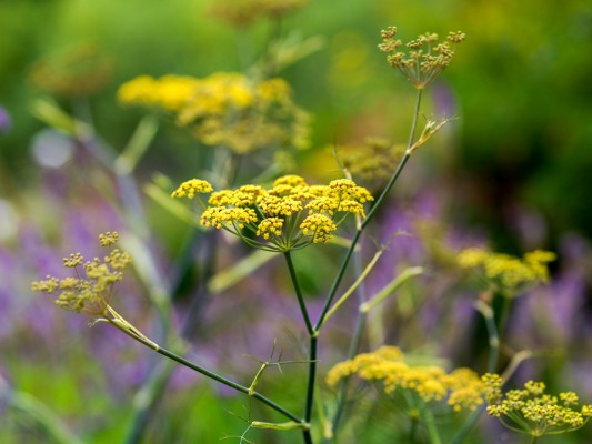 wpid10831-Late-Summer-Family-Garden-PFOE004-nicola-stocken.jpg