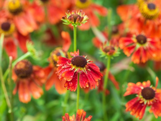 wpid10833-Late-Summer-Family-Garden-PHEE016-nicola-stocken.jpg