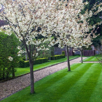wpid11061-Perfect-Lawns-GINH042-nicola-stocken.jpg