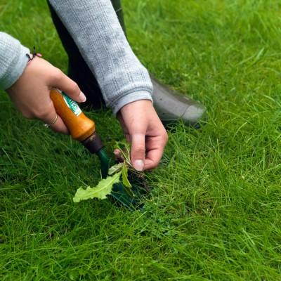 wpid11089-Perfect-Lawns-FGRA014-nicola-stocken.jpg