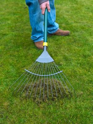 wpid11111-Perfect-Lawns-FGRA013-nicola-stocken.jpg