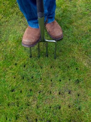 wpid11113-Perfect-Lawns-FGRA012-nicola-stocken.jpg