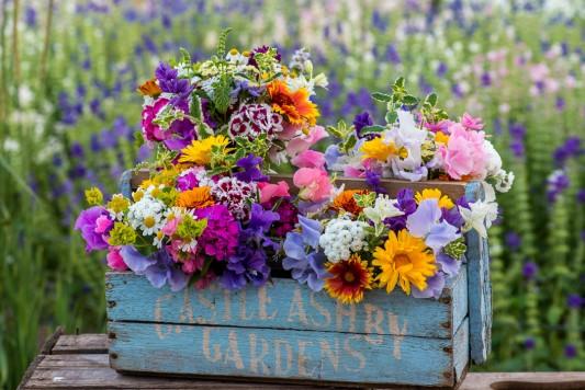 wpid11319-Cut-Summer-Flowers-GORB036-nicola-stocken.jpg