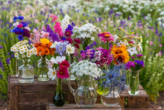 wpid11325-Cut-Summer-Flowers-GORB037-nicola-stocken.jpg