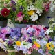 wpid11337-Cut-Summer-Flowers-GORB014-nicola-stocken.jpg thumbnail