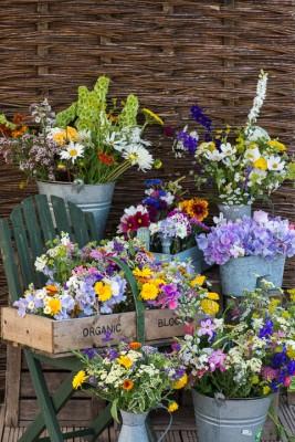 wpid11349-Cut-Summer-Flowers-GORB022-nicola-stocken.jpg