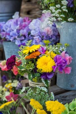 wpid11361-Cut-Summer-Flowers-GORB035-nicola-stocken.jpg